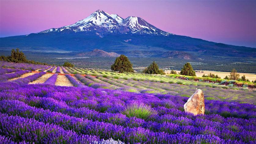 Tour du lịch Nhật Bản - Hokkaido: Thiên đường của tạo hóa