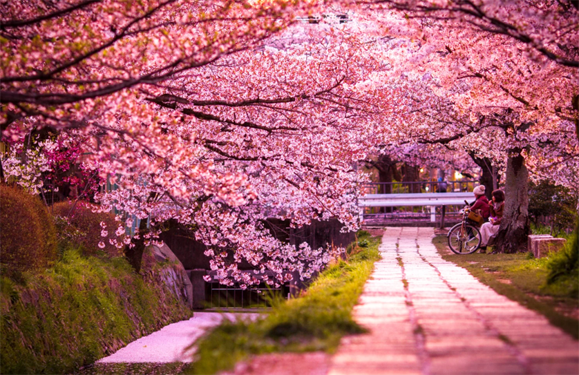 Tour du lịch Nhật Bản: Tokyo - Phú Sỹ - Nagoya - Kyoto - Osaka (Bay ANA)