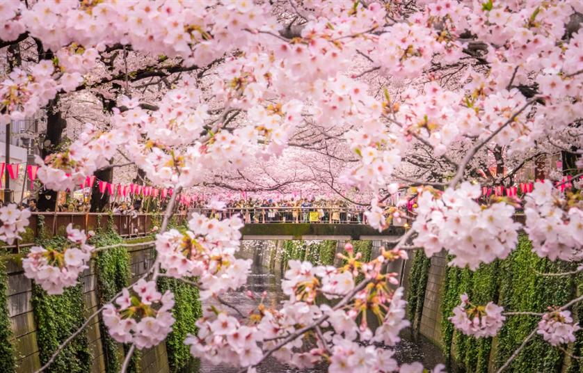 Tour du lịch Nhật Bản: Tokyo - Phú Sỹ - Nagoya - Kyoto - Osaka (Bay VJ)